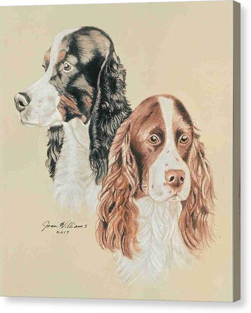 Springer Spaniels Canvas Print by Joan Williams