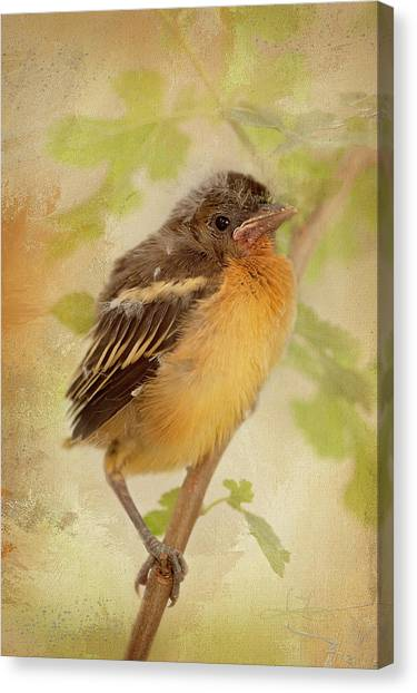 Spring's Sweet Song Canvas Print