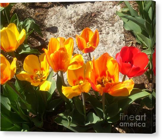 Canvas Print featuring the photograph Springtime Flowers by Rachel Maynard