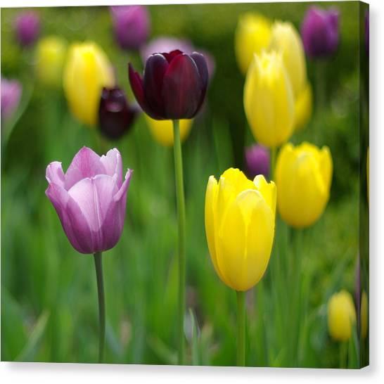 Springtime Glory Canvas Print