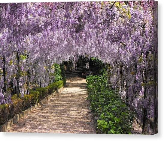 Springtime In Florence Canvas Print