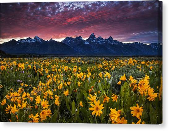Teton Canvas Print - Springtime In The Mountains by Andrew Soundarajan