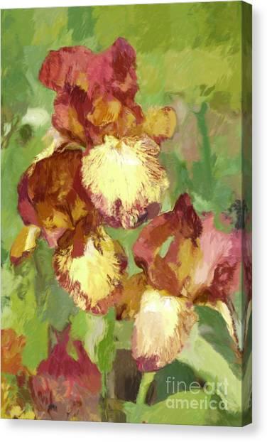 Springtime Iris Canvas Print by Susan  Lipschutz