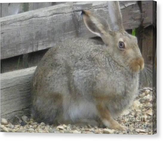 Springtime Rabbit Canvas Print