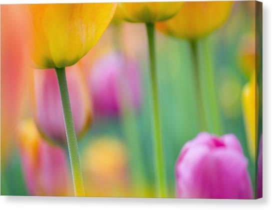 Decorativ Canvas Print - Springtime by Silke Magino