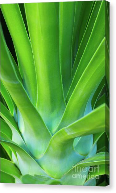 Sprout Canvas Print by Steven Dillon