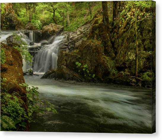 Mossy Forest Canvas Print - Squaw Creek Falls by Michele James