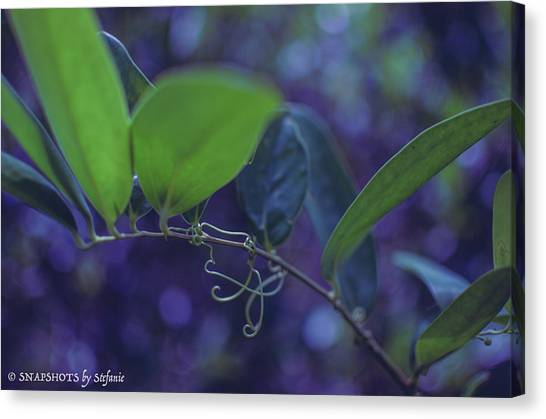 squiggle Vine Canvas Print