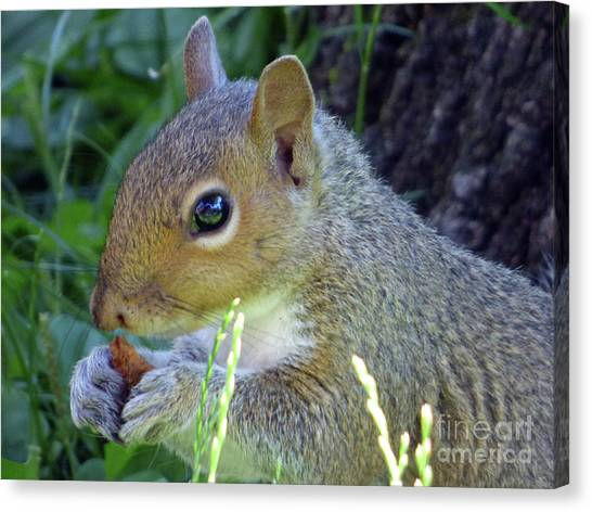 Squirrel Eating Canvas Print