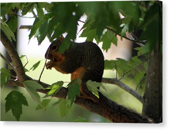 Canvas Print - Squirrel by Evelyn Patrick