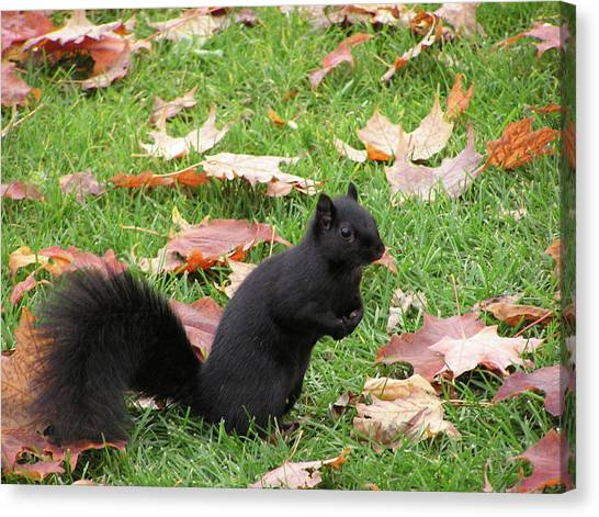 Squirrel Exploring Canvas Print by Richard Mitchell