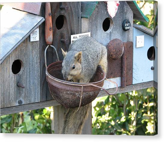 Squirrel Feeding Canvas Print