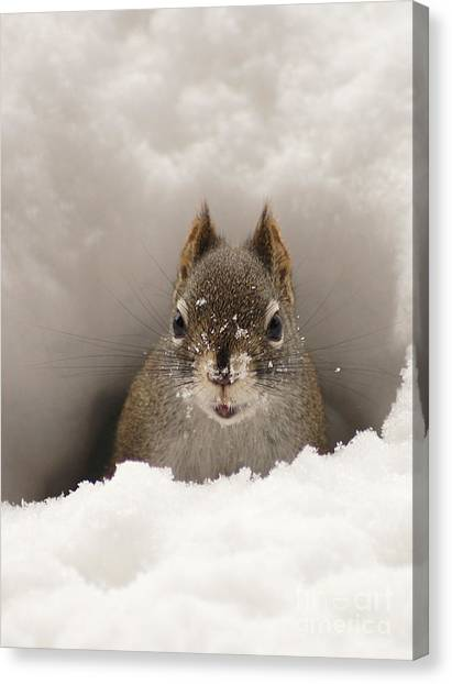 Squirrel In A Snow Tunnel Canvas Print