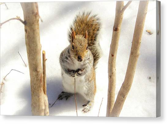 Canvas Print featuring the photograph Squirrel In Snow by Alison Frank