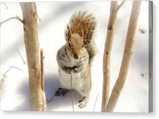 Squirrel In Snow Canvas Print