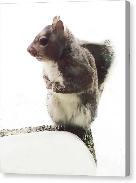 Canvas Print featuring the photograph Squirrel In The Snow by Roger Bester