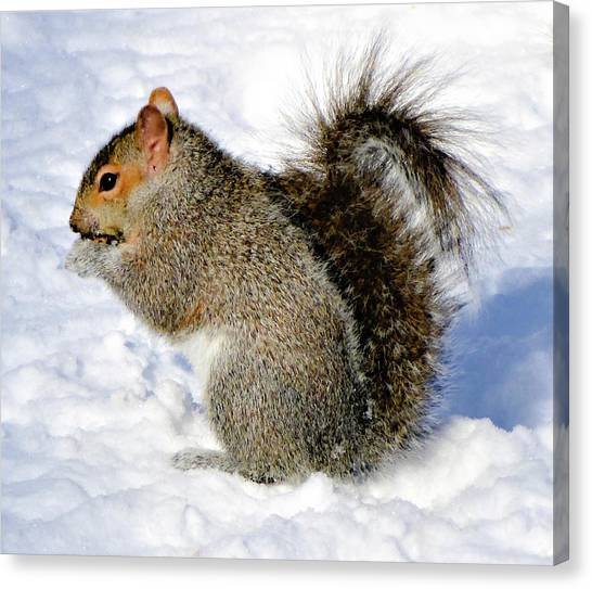 Squirrel In Winter Canvas Print