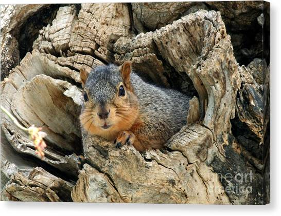 Canvas Print - Squirrel Laying On The Hole Opening by Lori Tordsen