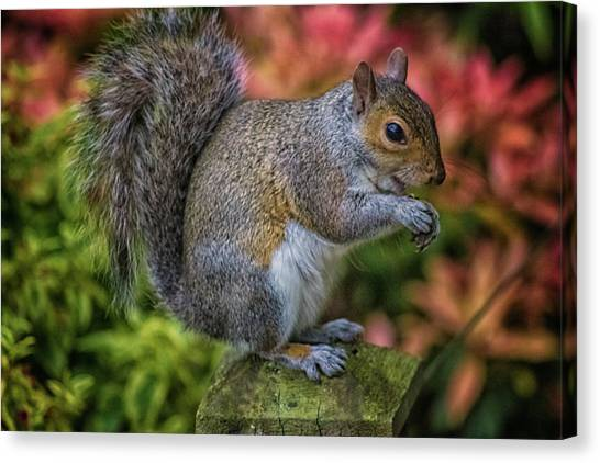 Small Mammals Canvas Print - Squirrel by Martin Newman