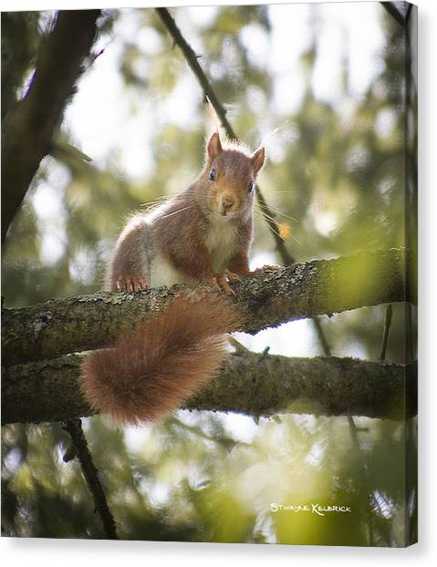 Canvas Print featuring the photograph Squirrel On The Spot by Stwayne Keubrick
