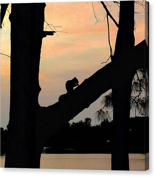 Small Mammals Canvas Print - Squirrel On Tree At Sunset by Juan Silva