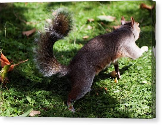 Squirrel Running Canvas Print