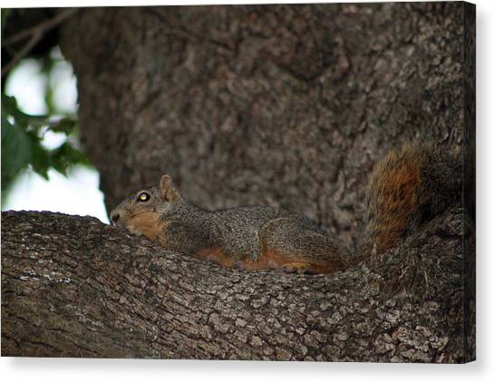 Canvas Print - Squirrel1 by Evelyn Patrick