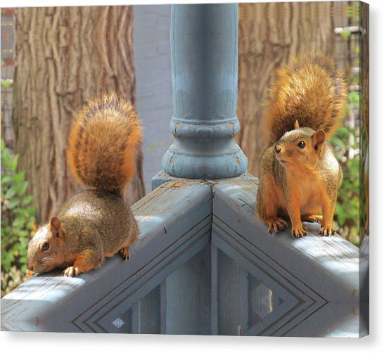 Squirrels Balancing On A Railing Canvas Print