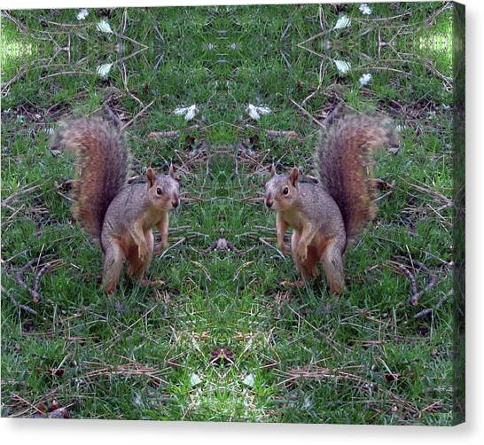 Squirrels With Question Mark Tails Canvas Print