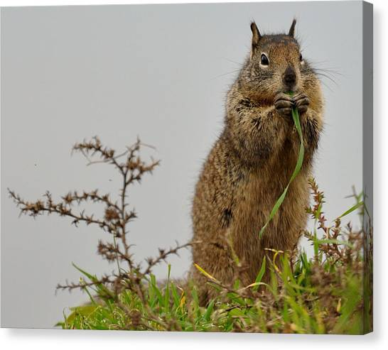 Squirrely Snacks Canvas Print