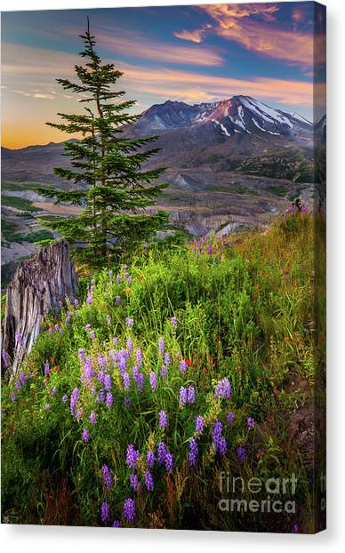Mount St. Helens Canvas Print - St Helens Caldera by Inge Johnsson
