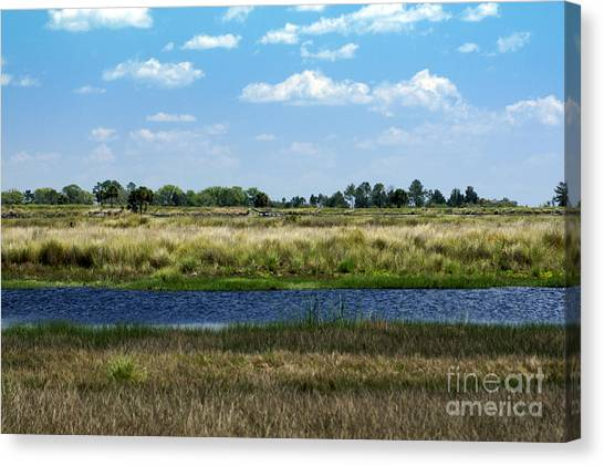 St. Marks Wildlife Refuge Canvas Print