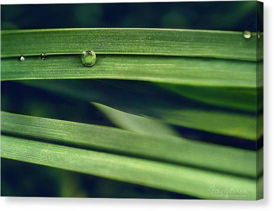 Canvas Print featuring the photograph Stacked by Gene Garnace