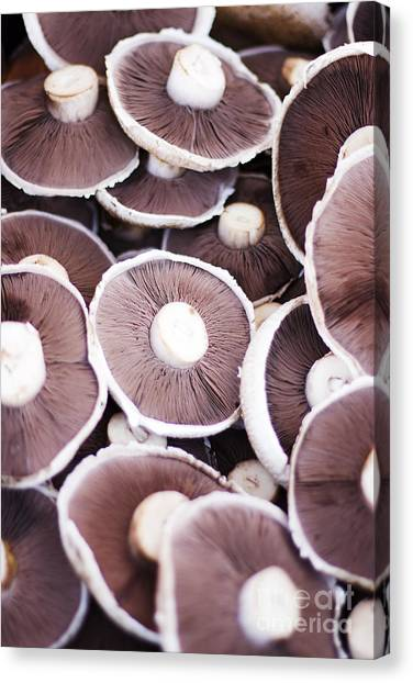 Shrooms Canvas Print - Stacked Mushrooms by Jorgo Photography - Wall Art Gallery