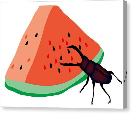 Canvas Print - Stag Beetle Is Eating A Piece Of Red Watermelon by Moto-hal