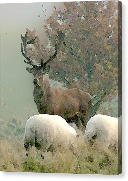 Stag Canvas Print by John Bradburn