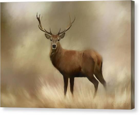 Canvas Print - Stag Pride by Amanda Lakey