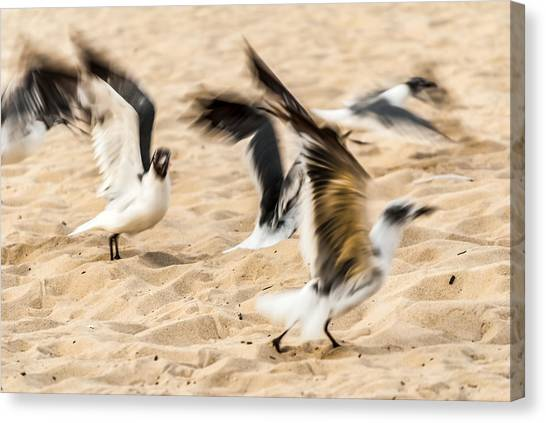Stages Of Flight Canvas Print
