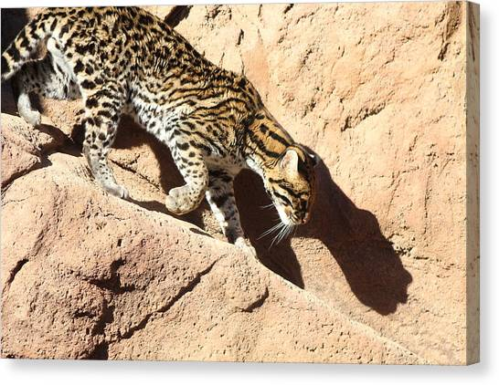 Ocelot Shadow, Arizona Canvas Print