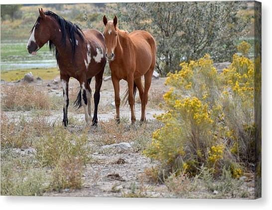 Stallion And Mare Canvas Print