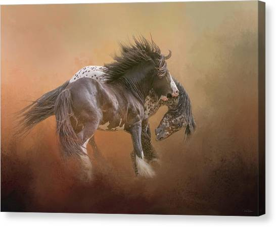 Stallion Play Canvas Print