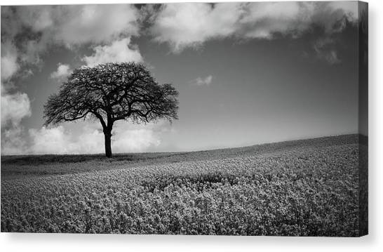 Nottinghamshire Canvas Print - Stand Alone by Chris Dale