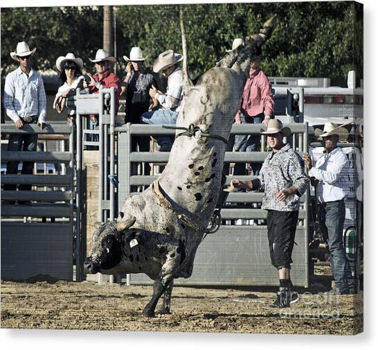 Bull Riding Canvas Print - Stand Up Performance by Gwyn Newcombe