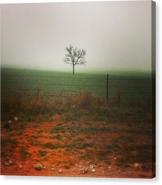 Standing Alone, A Lone Tree In The Fog. Canvas Print