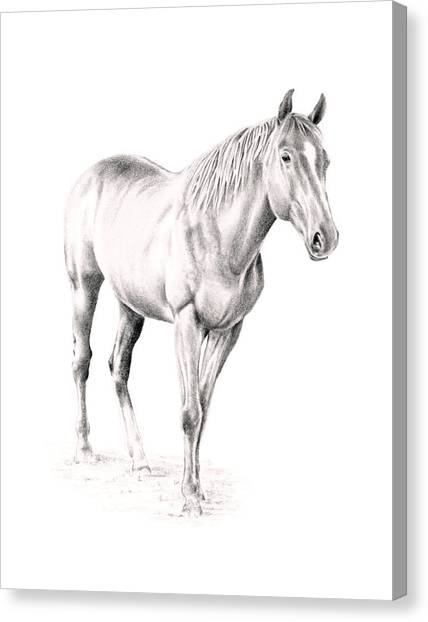 Standing Racehorse Canvas Print