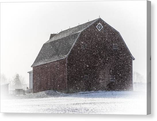 Standing Tall In The Snow Canvas Print