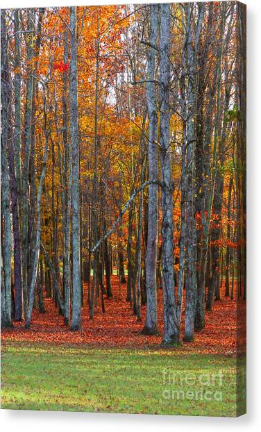 Canvas Print featuring the photograph Standing Tall On The Natchez Trace by T Lowry Wilson