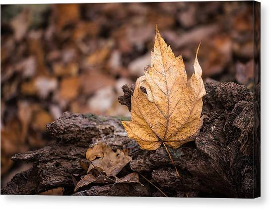 Maple Leaf Art Canvas Print - Standing Tall by Tom Mc Nemar