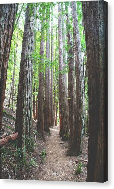Marin Canvas Print - Standoff by Laurie Search