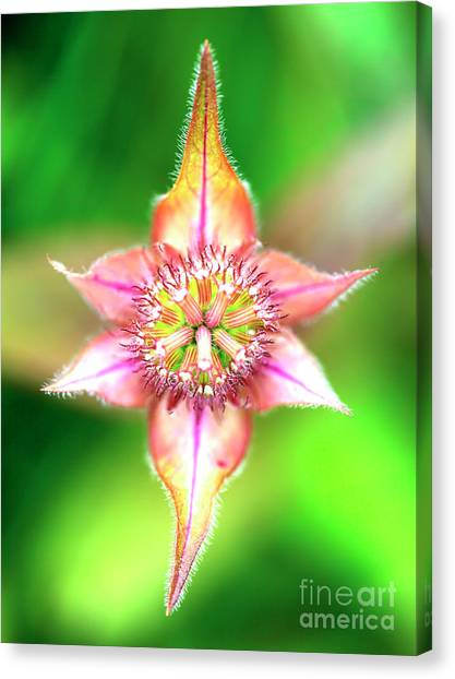 Star In Lurie Garden Canvas Print by John Rizzuto